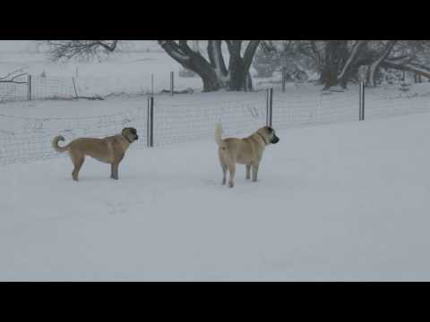 Goofy pups in the snow