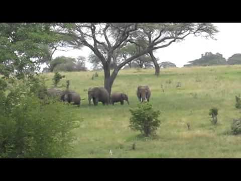 Тарангире: край слонов и баобабов - фото