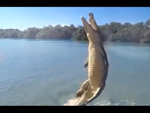 Yes, crocodiles are more dangerous, but don't underestimate alligators!