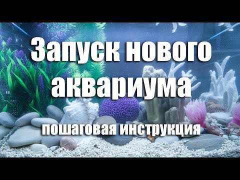 Запуск нового аквариума. Пошаговая инструкция