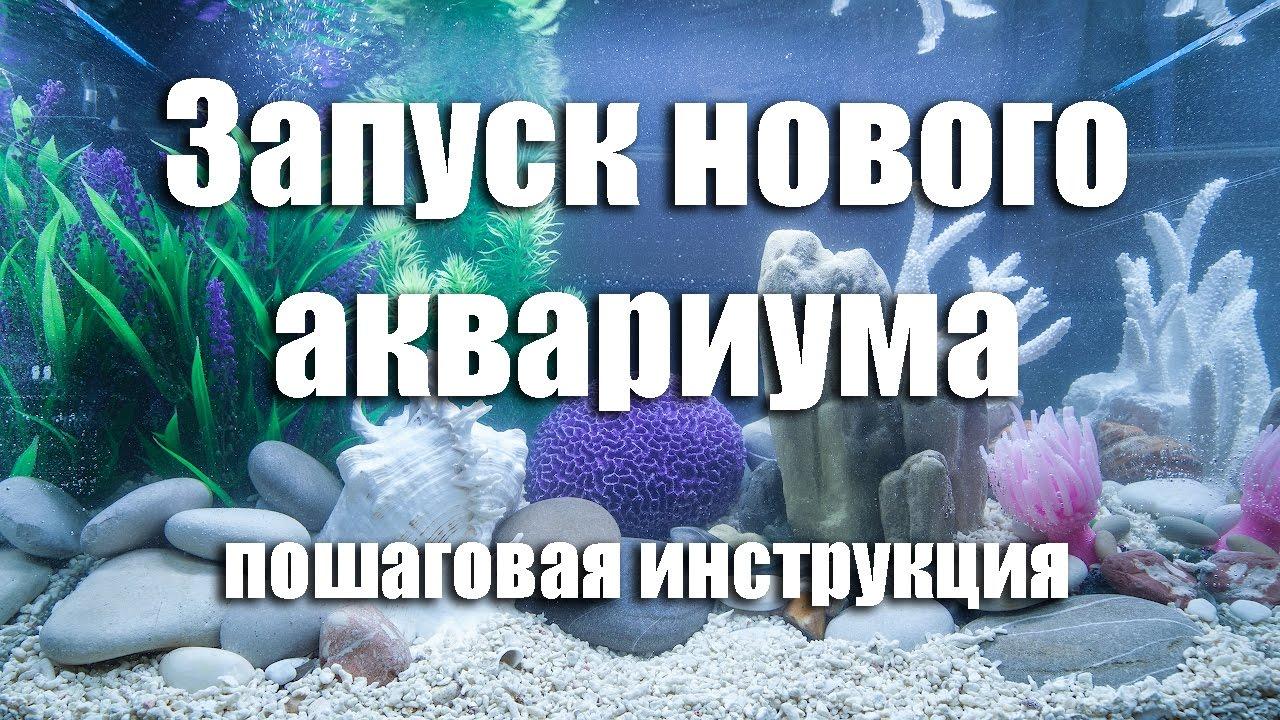 Запуск аквариума с растениями.