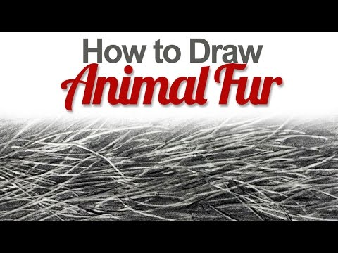 how-to-draw-animal-fur