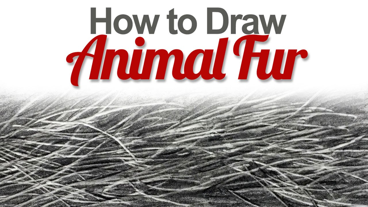 How To Draw Animal Fur Youtube