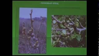 видео Смородины белой сорта: как выбрать лучший | Ягодный сад, или прикладное садоводство в советах, вопросах и ответах