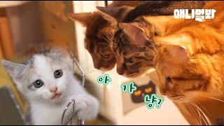 고양이별로 떠난 친구가 보내준 선물 l Present From A Cat Friend Who Left To Kitty Heaven