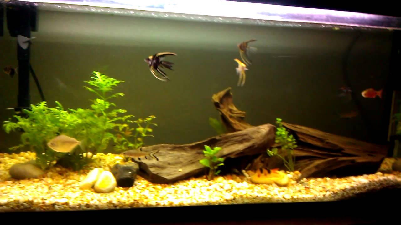 60 gallon lightly planted aquarium fish tank youtube for 60 gallon fish tank