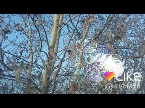 Как цветет ольха фото