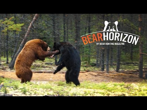 Traditional Wilderness | Saskatchewan Bear Hunt | Bear Horizon