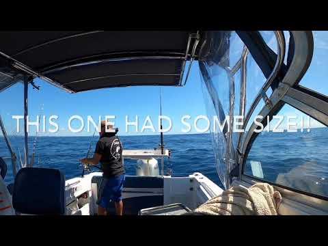 Kingfish Sydney Offshore - BaldMan Fishing