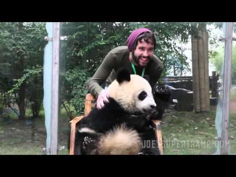 Hugging Giant Pandas In Chengdu, China -- JoeySupertramp.com
