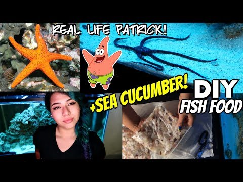 How I Care For My Pet Starfish + SALTWATER AQUARIUM UPDATE!