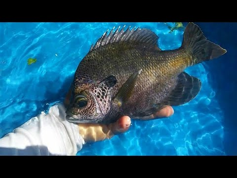 DIY HOMEMADE POOL Fish POND!!! Monster Mike