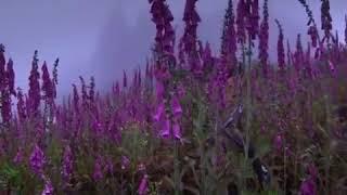 Icaros Medicine Song for Healing a Broken Heart