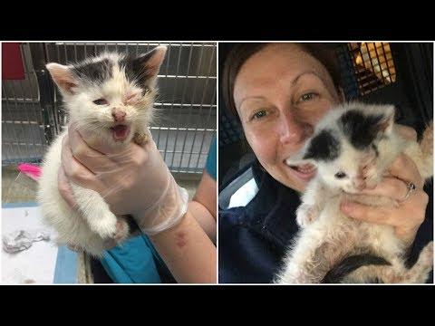 Kitten Cried So Loud The Whole Street Heard Her she is safe now