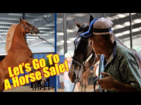 Let's Go To A Horse Sale!