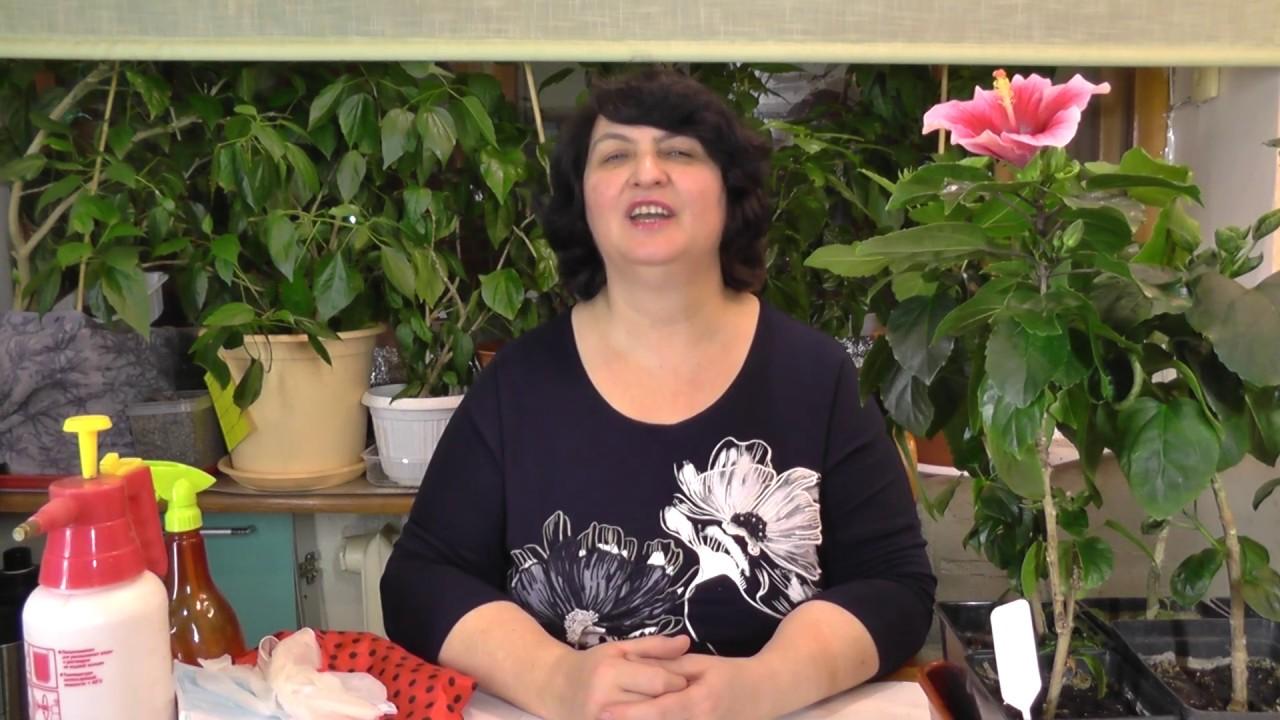 Как бороться с вредителями комнатных растений правильно?-видео Ольги Пряниковой