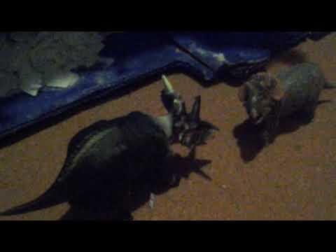 Review 63: Papo Baby Triceratops Horridus 2014