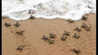 A paso de Tortuga