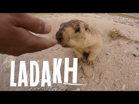 A Travel Documentary Videos On Ladakh | CAMERAMA | Official trailer in 4K #MyLadakhtrip