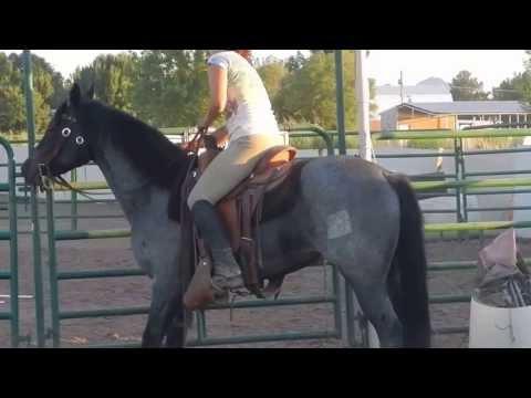 RNF Azuls Mojo 3 yr old colts First Ride