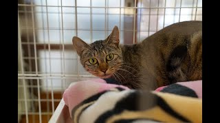 YouTube動画:命を守る「しっぽ村」を知ってほしい 犬猫保護シェルターの奮闘