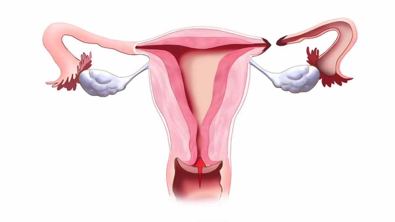 Fallopian Tube Animation Youtube