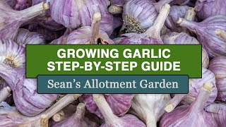 Growing Garlic - How to plant #garlic