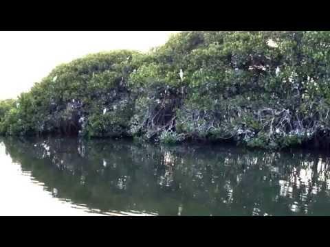 Saloum Delta, Senegal. Bird Island.