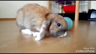Обычный день кролика дома