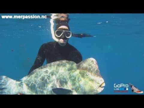 Spearfishing In New Caledonia - Green Humphead Parrotfish (39.2 Kg - 35.6 Kg) - GoPro HD