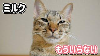 """猫の""""ミルクもういらない""""の顔が可愛すぎた"""