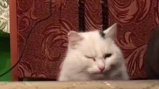 Васька / кот/ под музыку/ /жить.      Клип . Песня-жить жить жить. /Судьба кота/Сансара