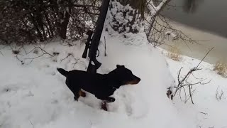 охота с пневматикой хатсан 125  airguns hatsan -Hatsan 125 hunting with Pneumatics with the dog