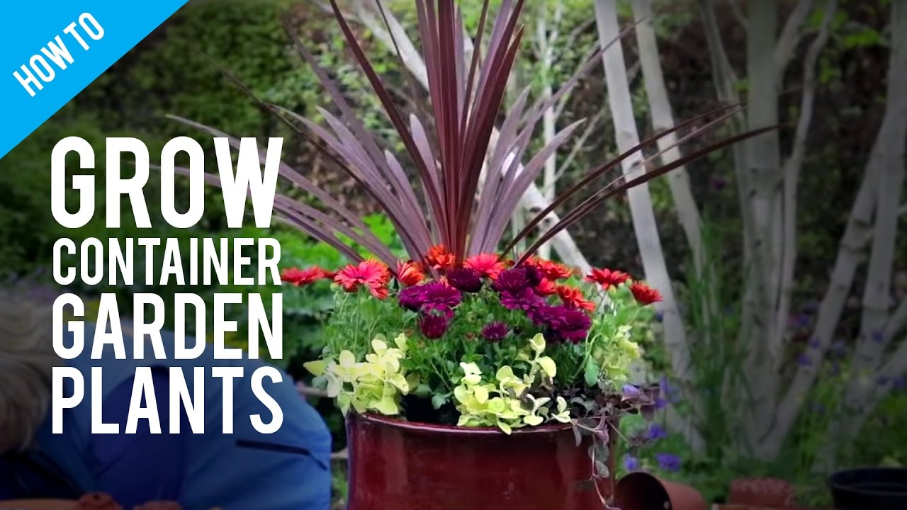 startupinsights.org & Easy Flowers To Grow In Pots \u0026 Gardener\\u0027s Path