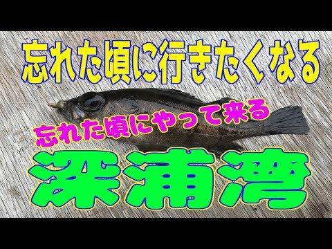 釣り動画ロマンを求めて 126釣目(深浦湾)