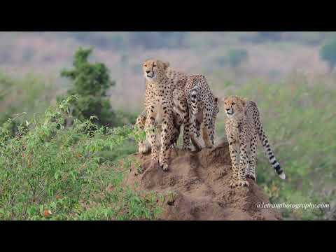 2017 Africa Safari in 4K