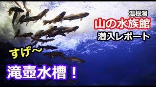 山の水族館潜入レポート 前編 「おばさんがメーテル!?」