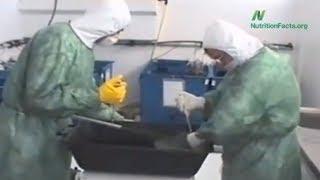 Nemoc šílených ryb