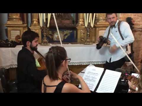 Miss Violina