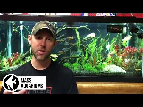 The Pros & Cons of having Pressurized CO2 in the Planted Aquarium