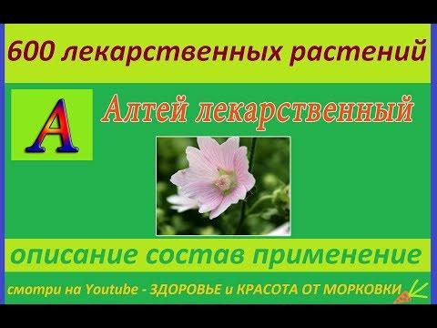 Алтей лекарственный 600 лекарственных растений