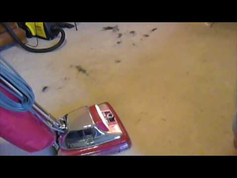 How To Remove Pet Hair FunnyCatTV