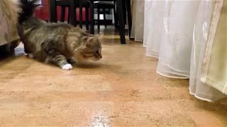 Кот отчаянно боится неизвестно чего