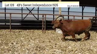 Lot 109 - 4B`S SWEET INDEPENDANCE 1935