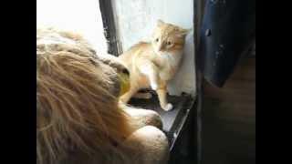 Кот и игрушечный Лев