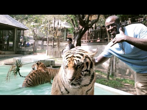 "Tiger Kingdom Chiang Mai "" Scary Behind Scenes Footage"""