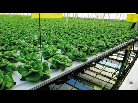 Viscon Hydroponics - Semi automated Deep Water Culture System