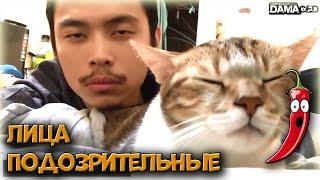 Видео приколы с Животными: смешные коты и кошки   Коуб приколы 2019   Акций перец #9