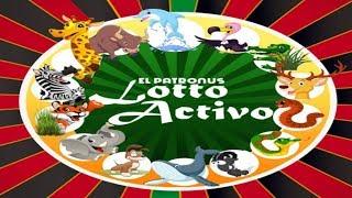 Lotto Activo Sorteo 5:00 PM 20/07/2018 (resumen)