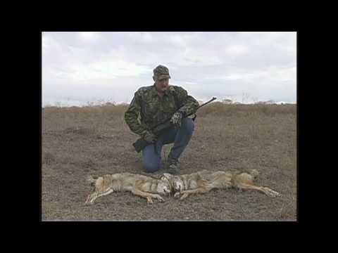 Predator/coyote Hunting near Texas Motor Speedway with Glenn Guess